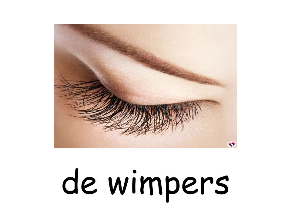 de wimpers