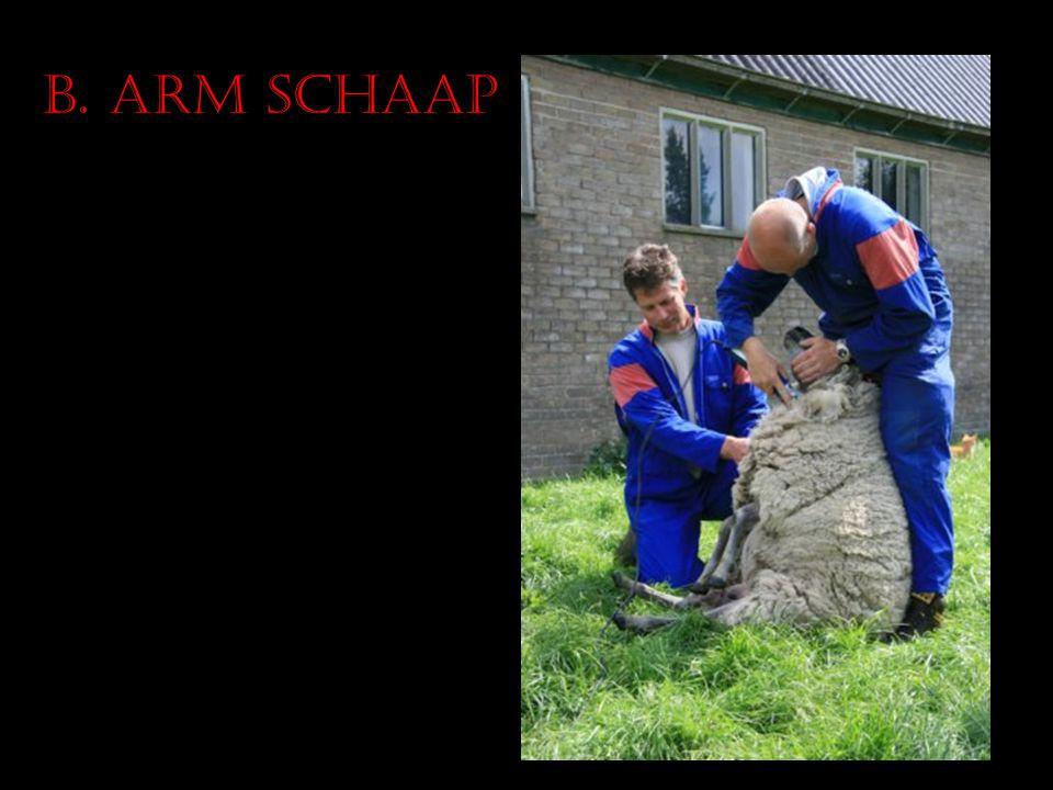 B. Arm schaap