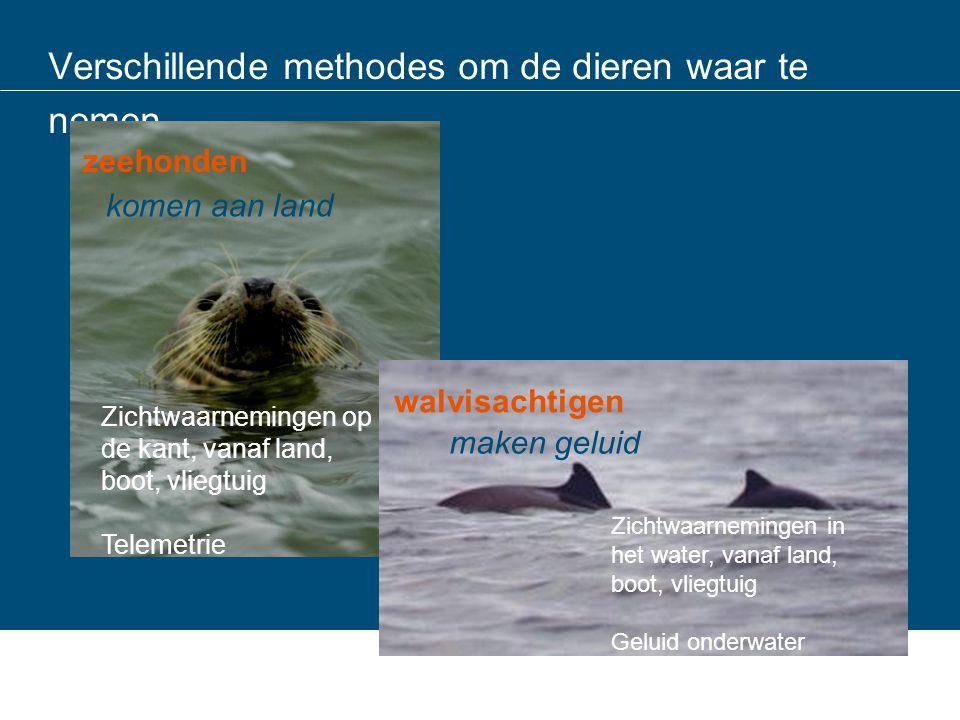 Output tellingen: combinatie met zenderdata: grijze zeehondenzeehonden Zeehonden (ook gewone zeehonden) zwemmen veel verder dan verwacht Elk dier doet wat anders Kaarten ook voor Gewone zeehonden gemaakt in het kader van windmolen onderzoek (OWEZ); RWS houdt publicatie tegen
