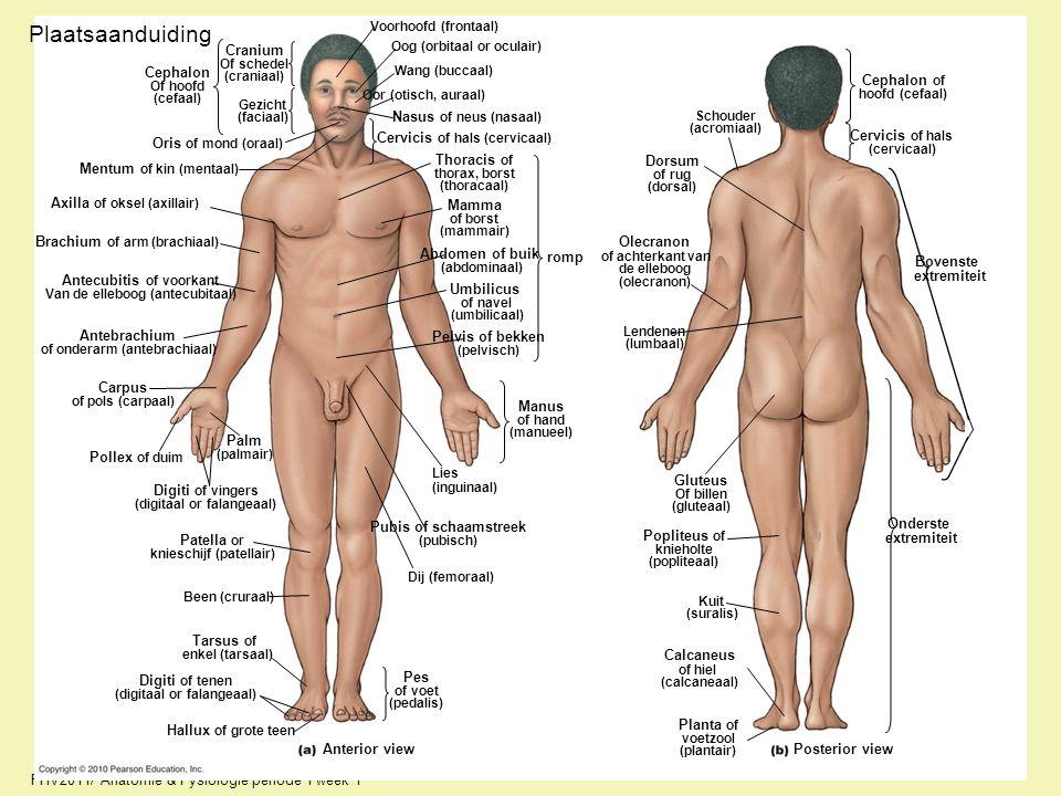 FHV2011/ Anatomie & Fysiologie periode 1 week 1 Plaatsaanduiding Cephalon Of hoofd (cefaal) Cranium Of schedel (craniaal) Gezicht (faciaal) Oris of mo