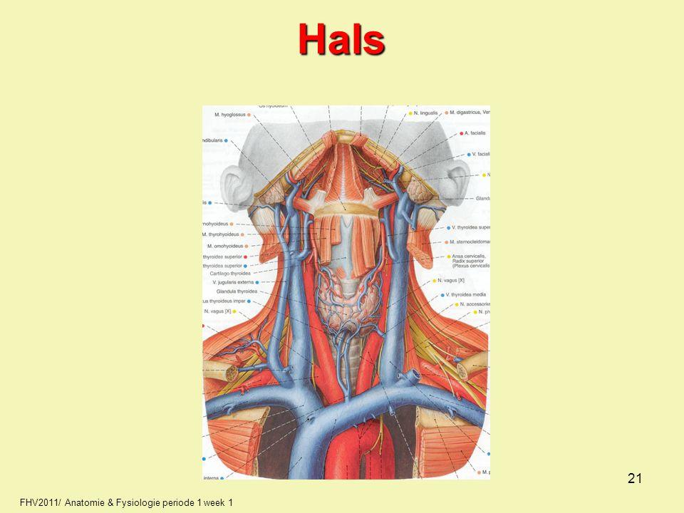FHV2011/ Anatomie & Fysiologie periode 1 week 1Hals 21