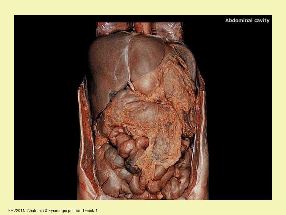 FHV2011/ Anatomie & Fysiologie periode 1 week 1