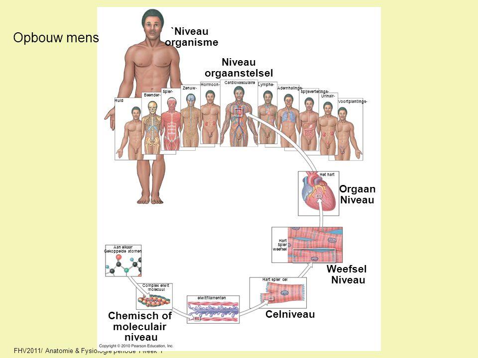 FHV2011/ Anatomie & Fysiologie periode 1 week 1 Opbouw mens Chemisch of moleculair niveau Aan elkaar Gekoppelde atomen Complex eiwit molecuul eiwitfil
