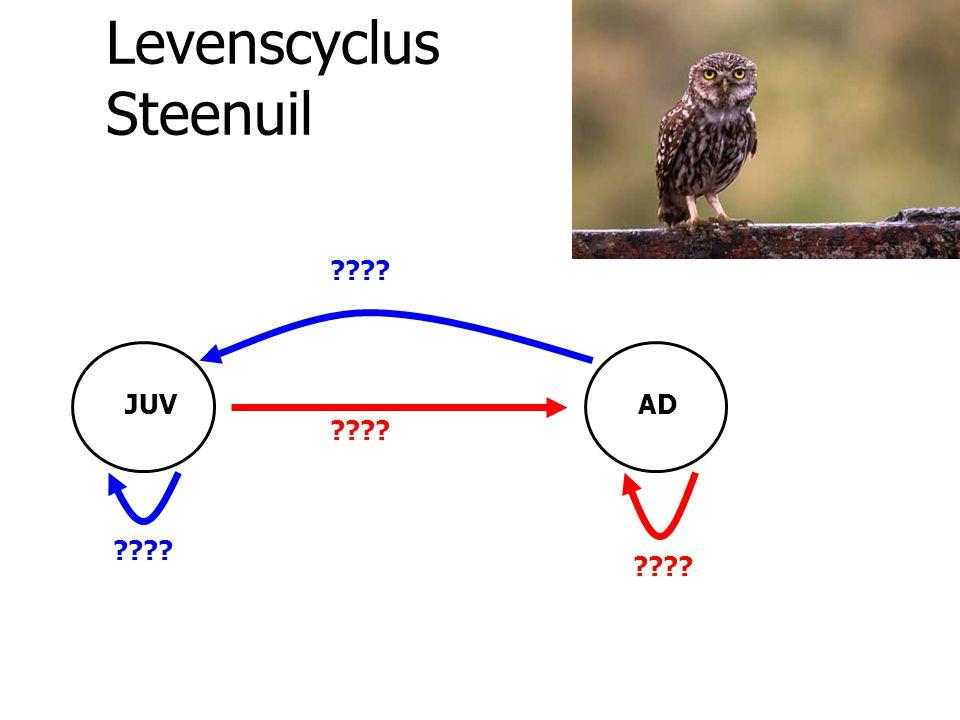Levenscyclus Steenuil ???? JUVAD ????