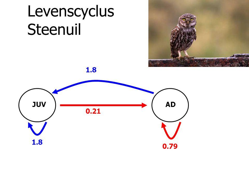 Levenscyclus Steenuil 1.8 0.21 JUVAD 0.79
