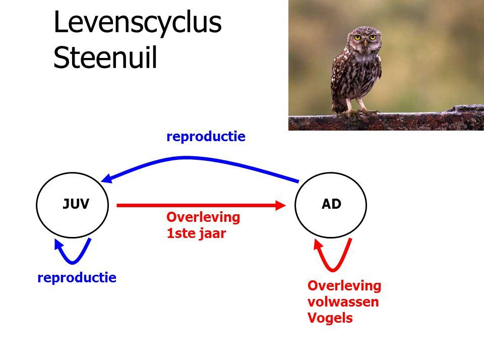 Levenscyclus Steenuil reproductie Overleving 1ste jaar JUVAD Overleving volwassen Vogels
