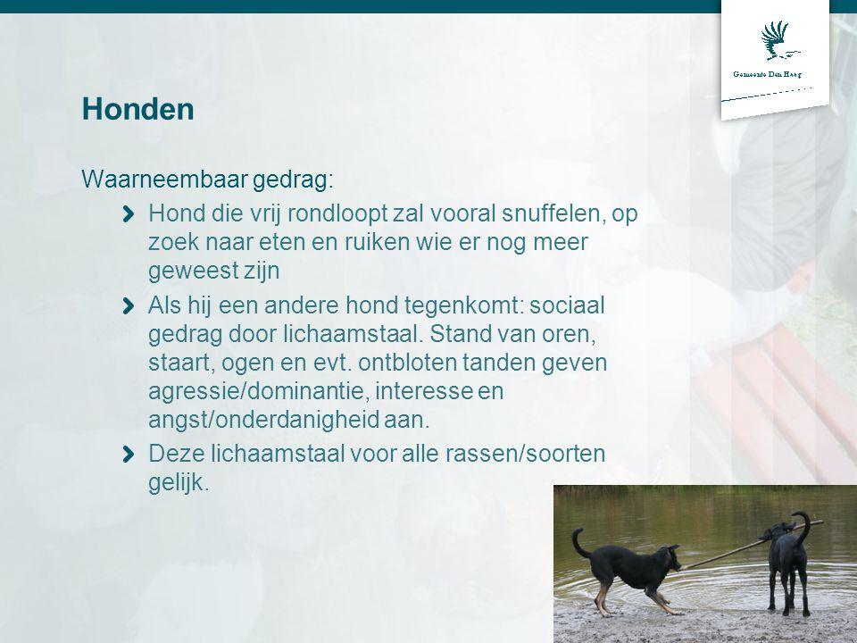 Honden Waarneembaar gedrag: Hond die vrij rondloopt zal vooral snuffelen, op zoek naar eten en ruiken wie er nog meer geweest zijn Als hij een andere