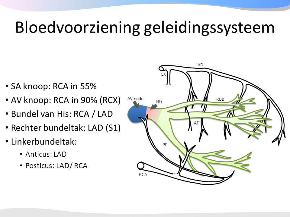 Bloedvoorziening geleidingssysteem SA knoop: RCA in 55% AV knoop: RCA in 90% (RCX) Bundel van His: RCA / LAD Rechter bundeltak: LAD (S1) Linkerbundelt