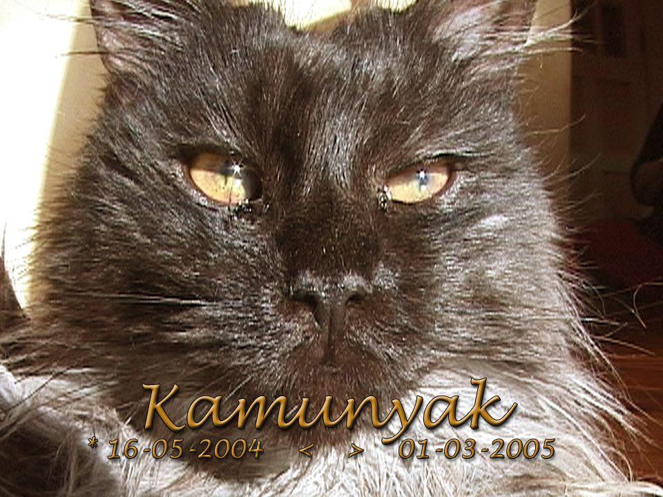 Kamunyak * 16-05-2004 01-03-2005 +