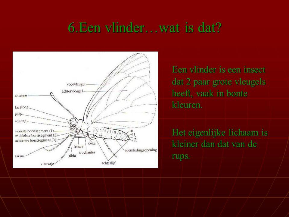 6.Een vlinder…wat is dat.
