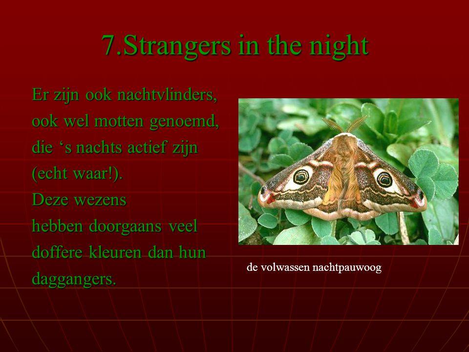 7.Strangers in the night Er zijn ook nachtvlinders, ook wel motten genoemd, die 's nachts actief zijn (echt waar!).