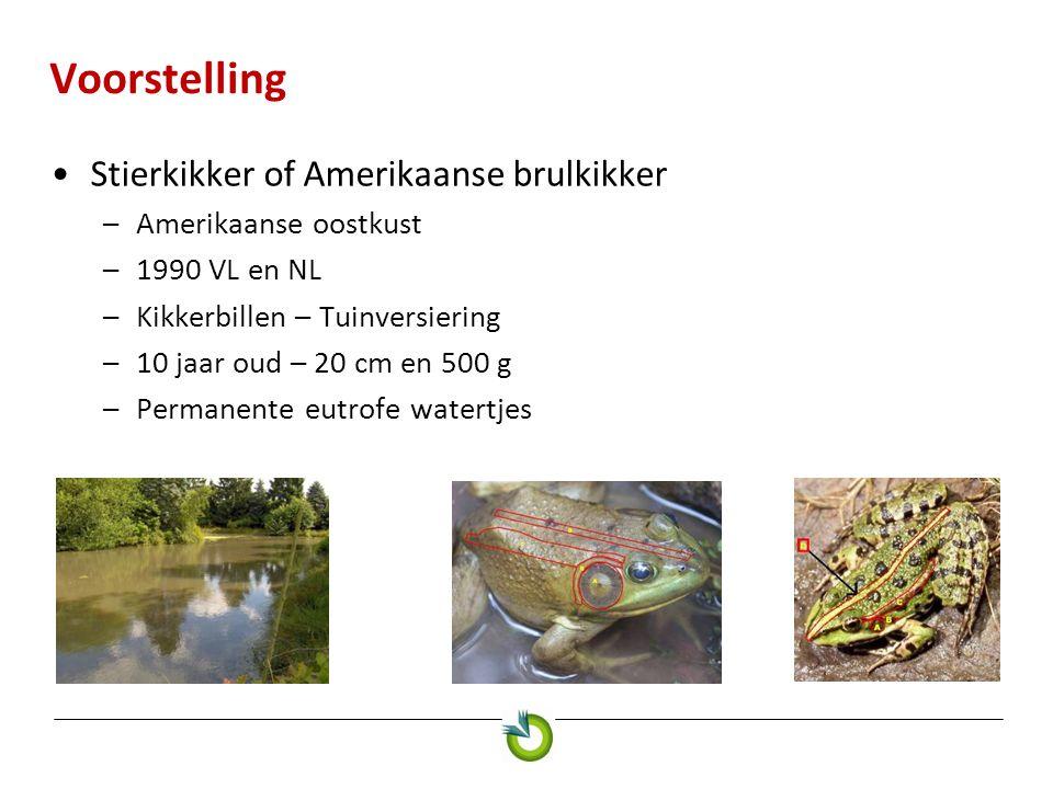 Voorstelling Stierkikker of Amerikaanse brulkikker –Amerikaanse oostkust –1990 VL en NL –Kikkerbillen – Tuinversiering –10 jaar oud – 20 cm en 500 g –