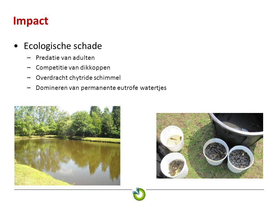 Impact Ecologische schade –Predatie van adulten –Competitie van dikkoppen –Overdracht chytride schimmel –Domineren van permanente eutrofe watertjes