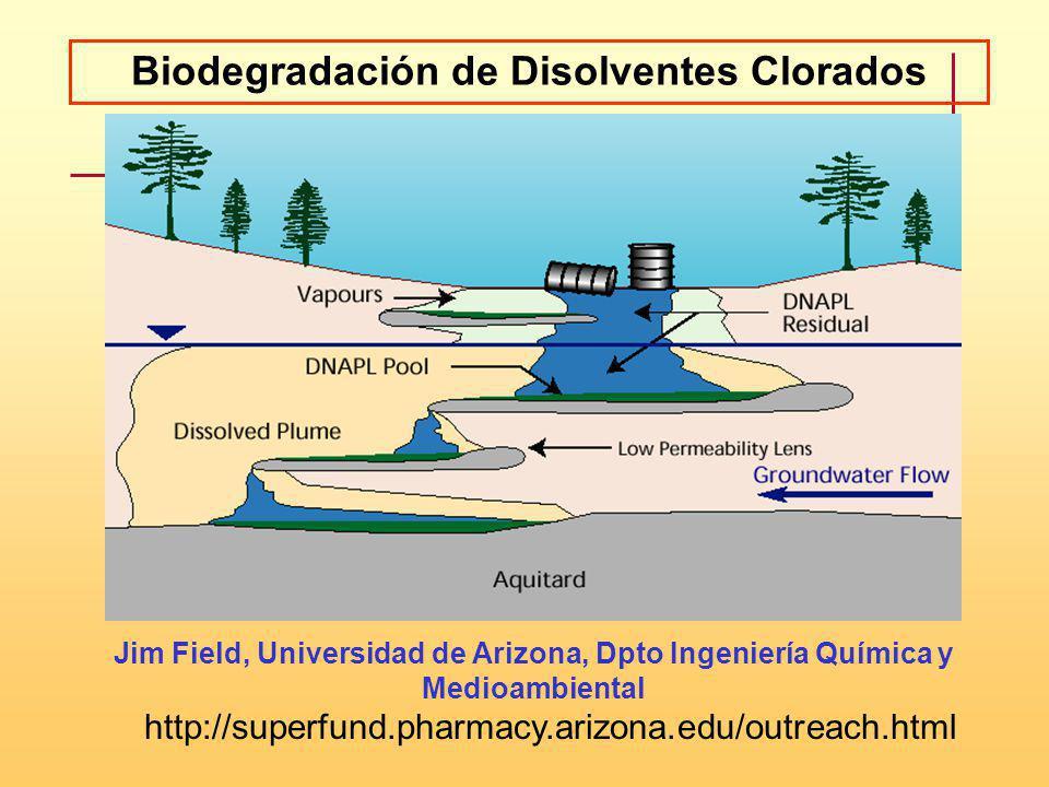 Biodegradación de Disolventes Clorados Jim Field, Universidad de Arizona, Dpto Ingeniería Química y Medioambiental http://superfund.pharmacy.arizona.e