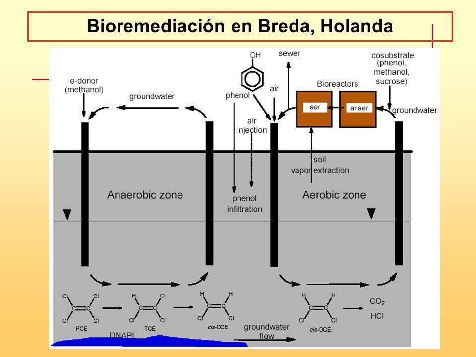 Bioremediación en Breda, Holanda