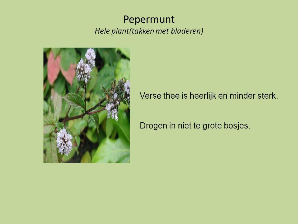 Pepermunt Hele plant(takken met bladeren) Verse thee is heerlijk en minder sterk. Drogen in niet te grote bosjes.