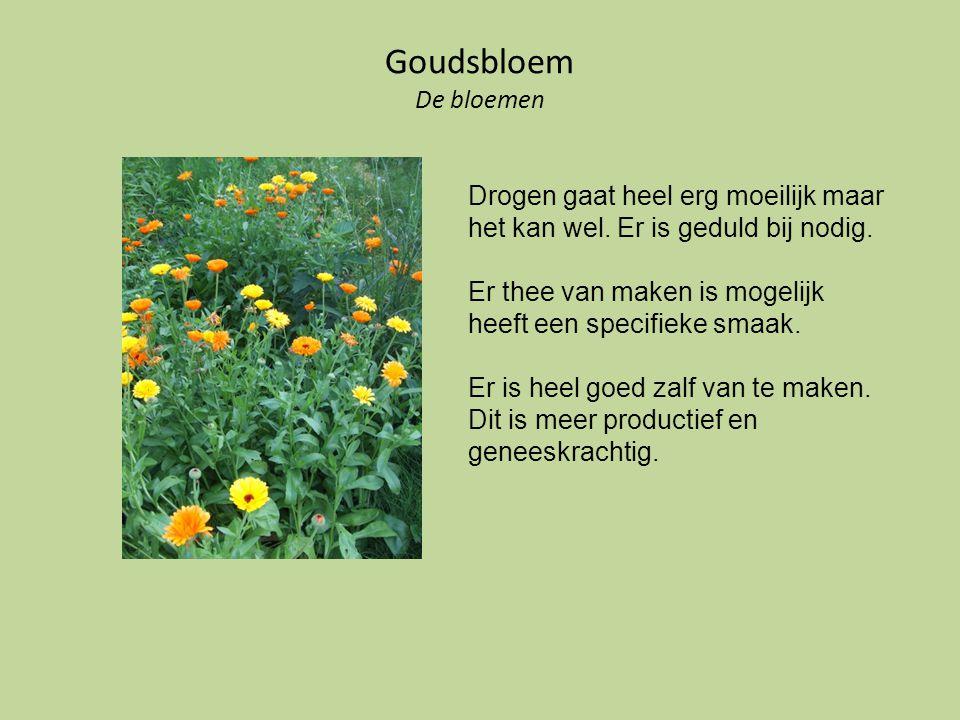 Goudsbloem De bloemen Drogen gaat heel erg moeilijk maar het kan wel. Er is geduld bij nodig. Er thee van maken is mogelijk heeft een specifieke smaak