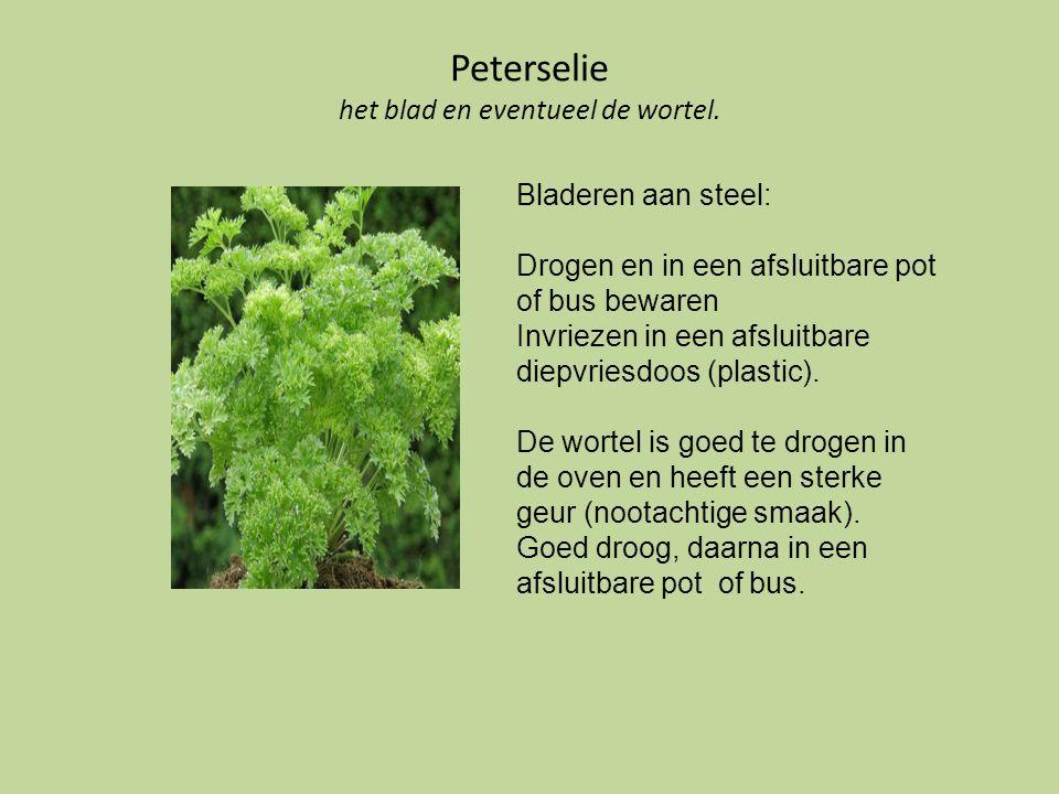 Peterselie het blad en eventueel de wortel. Bladeren aan steel: Drogen en in een afsluitbare pot of bus bewaren Invriezen in een afsluitbare diepvries
