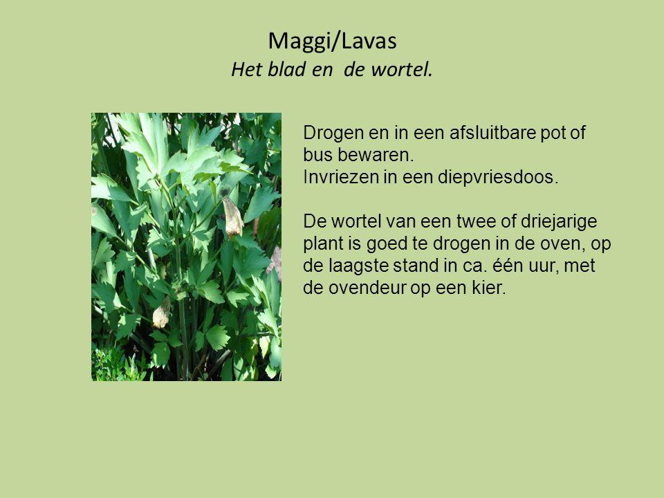 Maggi/Lavas Het blad en de wortel. Drogen en in een afsluitbare pot of bus bewaren. Invriezen in een diepvriesdoos. De wortel van een twee of driejari