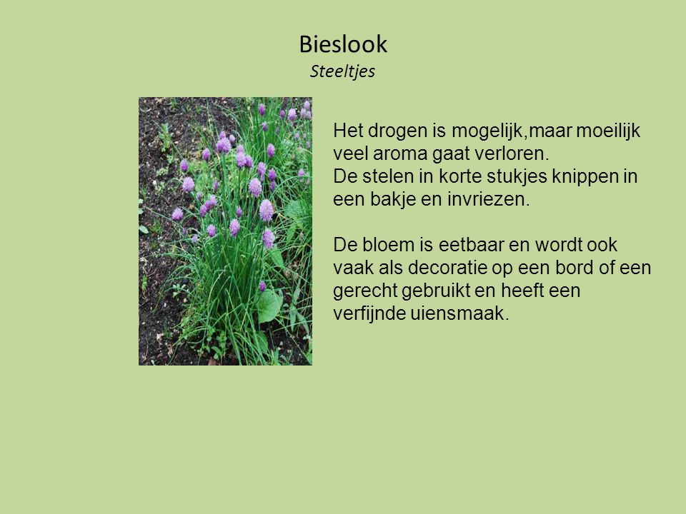 Salie Het blad Oogsten in juli tot begin september, na de bloei. Drogen in kleine bundeltjes.