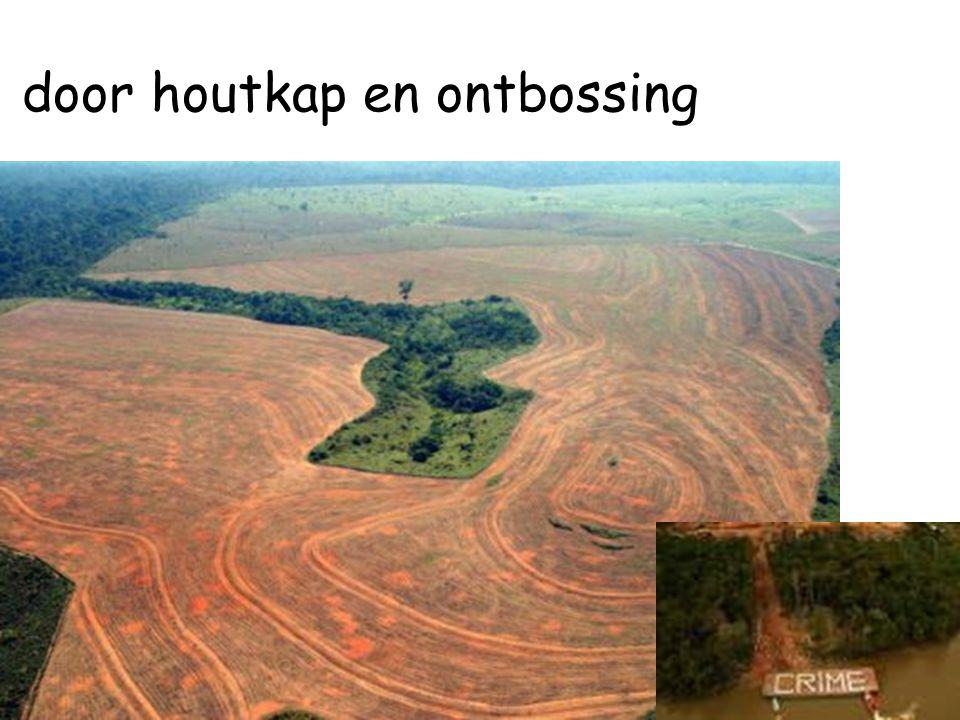 door houtkap en ontbossing