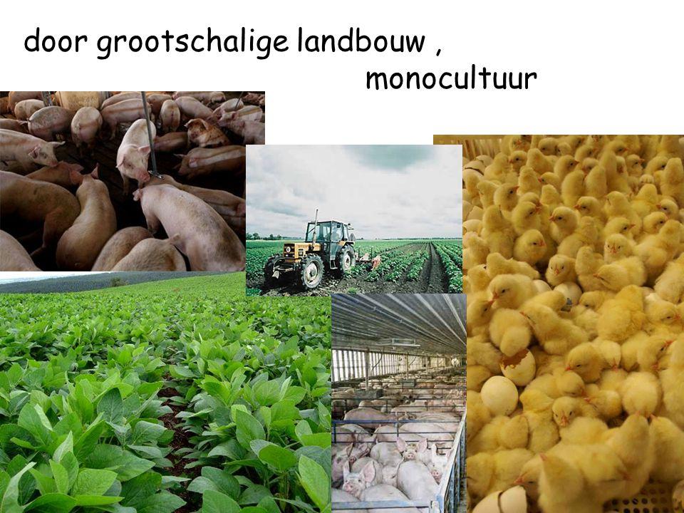 door grootschalige landbouw, monocultuur