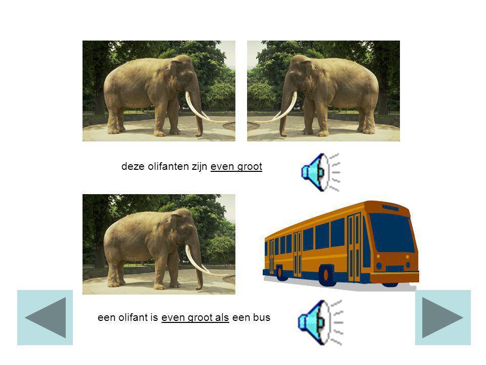 de olifant is groot. de muis is klein