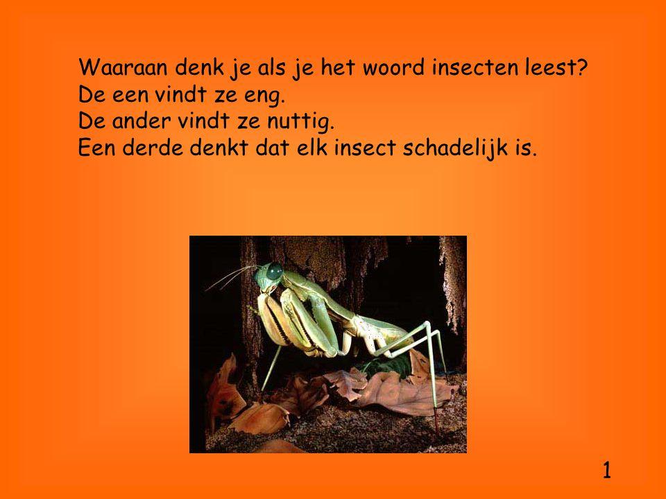 Waaraan denk je als je het woord insecten leest? De een vindt ze eng. De ander vindt ze nuttig. Een derde denkt dat elk insect schadelijk is. 1