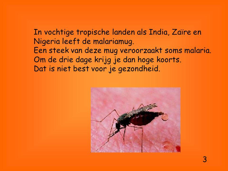 In vochtige tropische landen als India, Zaïre en Nigeria leeft de malariamug. Een steek van deze mug veroorzaakt soms malaria. Om de drie dage krijg j