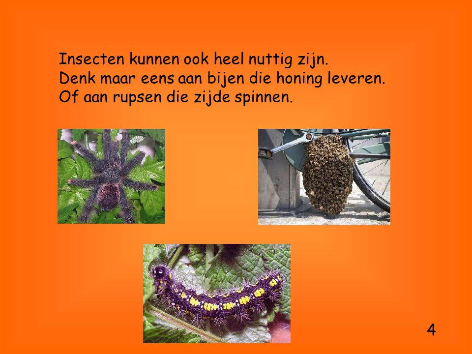 Insecten kunnen ook heel nuttig zijn. Denk maar eens aan bijen die honing leveren. Of aan rupsen die zijde spinnen. 4