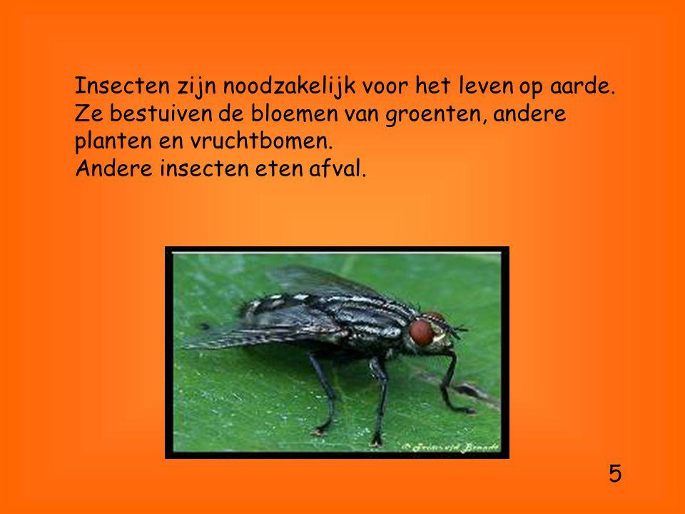 Insecten zijn noodzakelijk voor het leven op aarde. Ze bestuiven de bloemen van groenten, andere planten en vruchtbomen. Andere insecten eten afval. 5