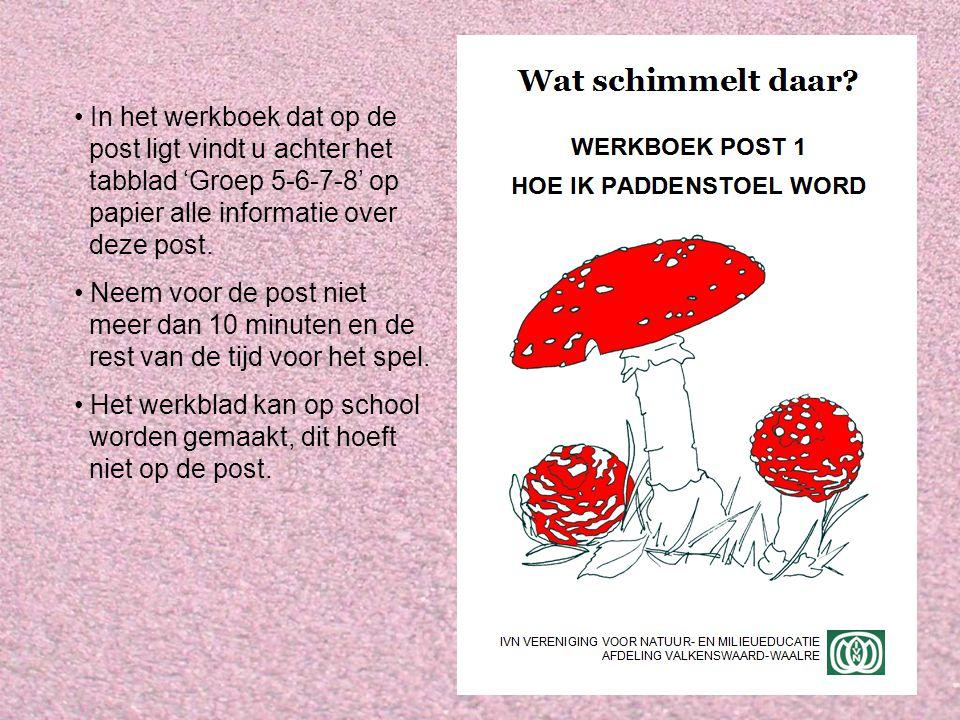 Informatie Op de post willen we de kinderen het volgende duidelijk maken: Hoe ontstaan paddenstoelen.