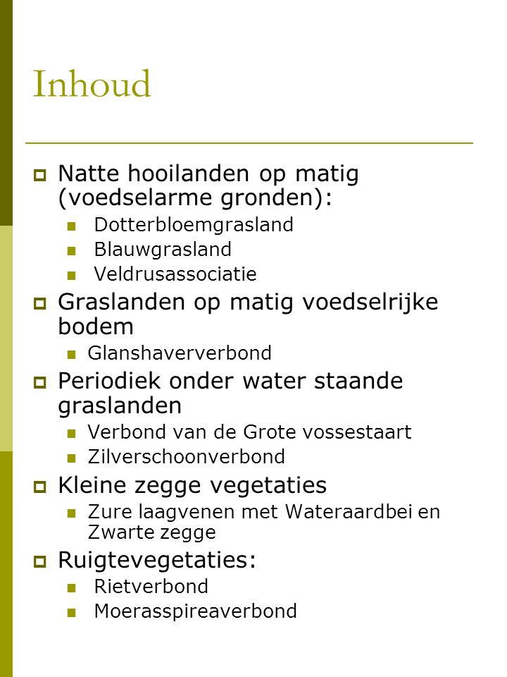 Dotterbloem-verbond (Calthion palustris, Tüxen 1937)  natte graslandvegetaties  kensoorten Vlaanderen: Echte koekoeksbloem, Grote ratelaar, Dotterbloem, Tweerijige zegge, Brede orchis en Gevleugeld hertshooi  opsplitsing 5 gemeenschappen:  Associatie van Gewone engelwortel en Moeraszegge  drie kensoorten: Moerasstreepzaad, Moesdistel en Adderwortel  Vallei Zwarte Beek Koersel