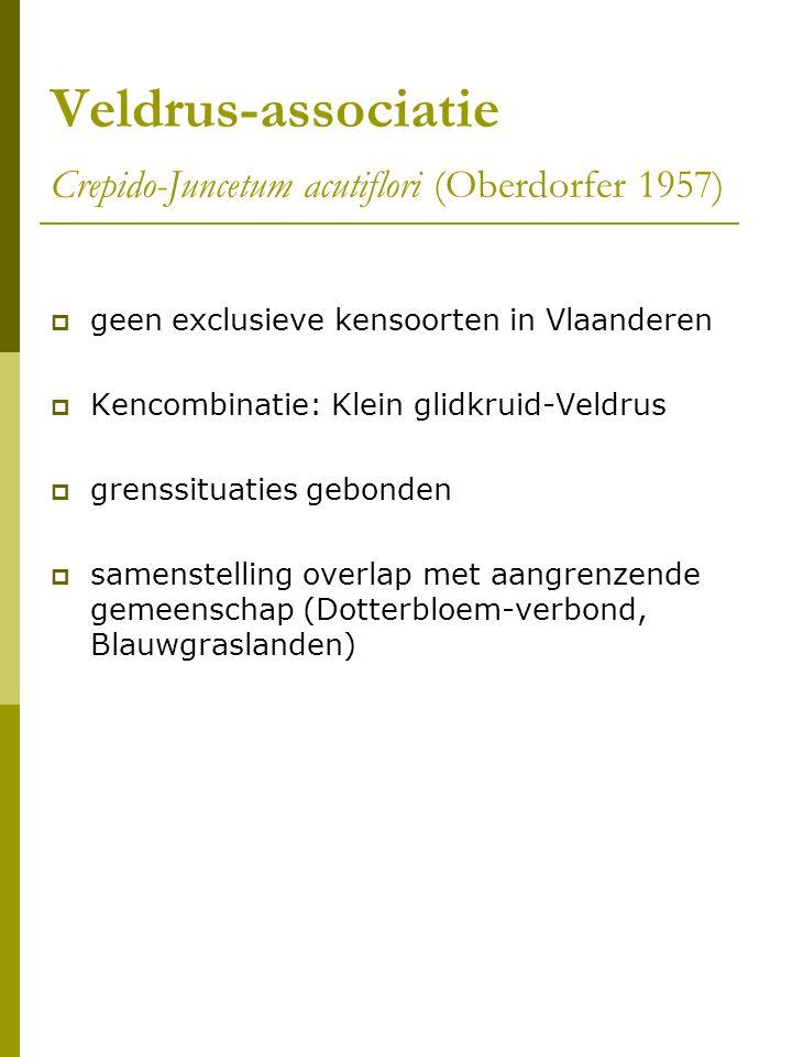 Veldrus-associatie Crepido-Juncetum acutiflori (Oberdorfer 1957)  geen exclusieve kensoorten in Vlaanderen  Kencombinatie: Klein glidkruid-Veldrus  grenssituaties gebonden  samenstelling overlap met aangrenzende gemeenschap (Dotterbloem-verbond, Blauwgraslanden)