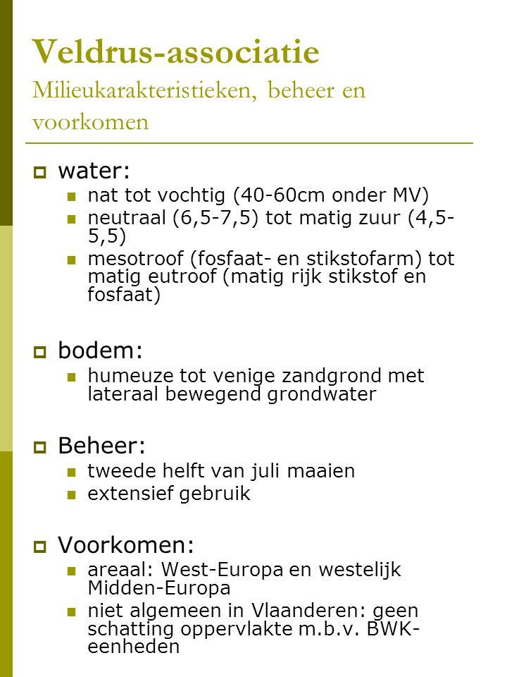 Veldrus-associatie Milieukarakteristieken, beheer en voorkomen  water: nat tot vochtig (40-60cm onder MV) neutraal (6,5-7,5) tot matig zuur (4,5- 5,5) mesotroof (fosfaat- en stikstofarm) tot matig eutroof (matig rijk stikstof en fosfaat)  bodem: humeuze tot venige zandgrond met lateraal bewegend grondwater  Beheer: tweede helft van juli maaien extensief gebruik  Voorkomen: areaal: West-Europa en westelijk Midden-Europa niet algemeen in Vlaanderen: geen schatting oppervlakte m.b.v.