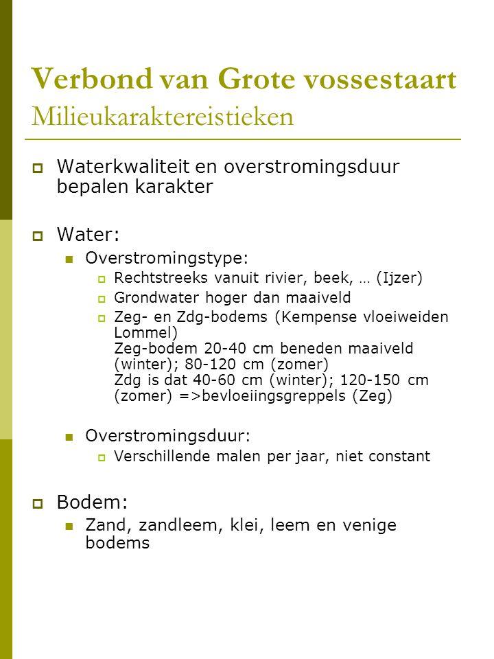 Verbond van Grote vossestaart Milieukaraktereistieken  Waterkwaliteit en overstromingsduur bepalen karakter  Water: Overstromingstype:  Rechtstreeks vanuit rivier, beek, … (Ijzer)  Grondwater hoger dan maaiveld  Zeg- en Zdg-bodems (Kempense vloeiweiden Lommel) Zeg-bodem 20-40 cm beneden maaiveld (winter); 80-120 cm (zomer) Zdg is dat 40-60 cm (winter); 120-150 cm (zomer) =>bevloeiingsgreppels (Zeg) Overstromingsduur:  Verschillende malen per jaar, niet constant  Bodem: Zand, zandleem, klei, leem en venige bodems