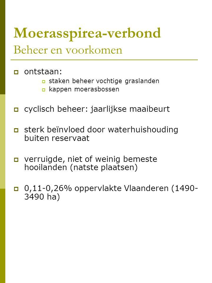 Moerasspirea-verbond Beheer en voorkomen  ontstaan:  staken beheer vochtige graslanden  kappen moerasbossen  cyclisch beheer: jaarlijkse maaibeurt  sterk beïnvloed door waterhuishouding buiten reservaat  verruigde, niet of weinig bemeste hooilanden (natste plaatsen)  0,11-0,26% oppervlakte Vlaanderen (1490- 3490 ha)