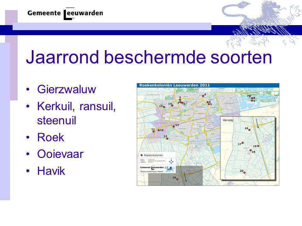 Jaarrond beschermde soorten Gierzwaluw Kerkuil, ransuil, steenuil Roek Ooievaar Havik