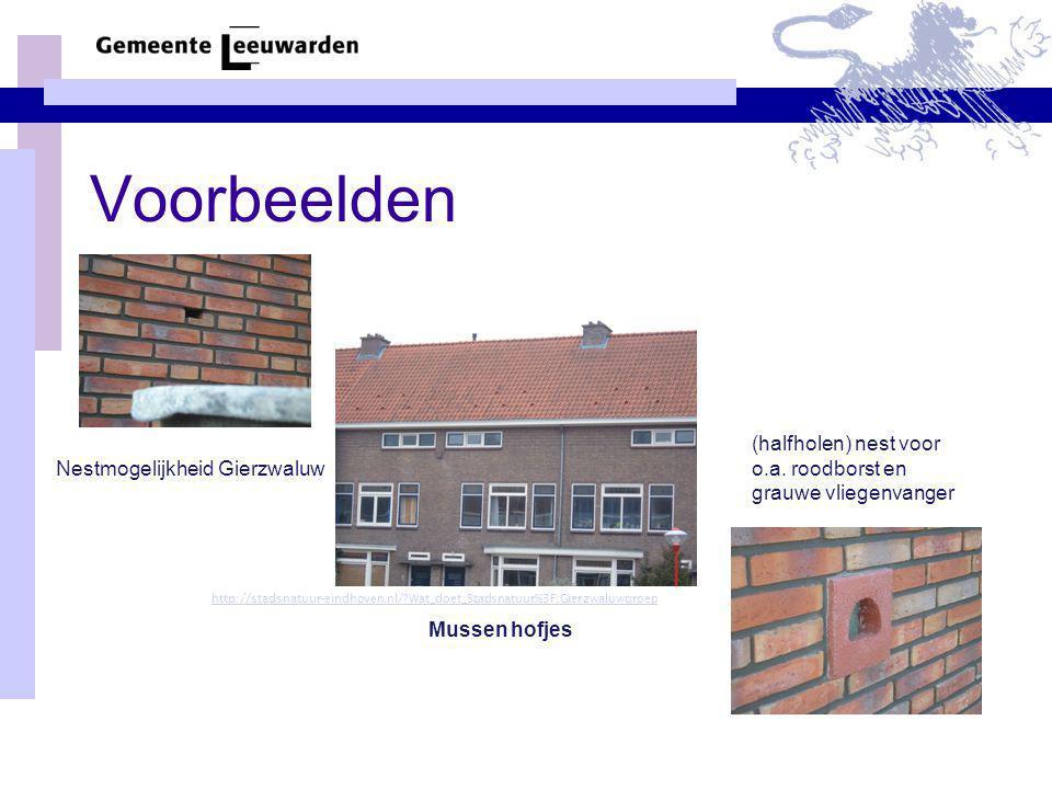 Voorbeelden http://stadsnatuur-eindhoven.nl/?Wat_doet_Stadsnatuur%3F:Gierzwaluwgroep Nestmogelijkheid Gierzwaluw Mussen hofjes (halfholen) nest voor o