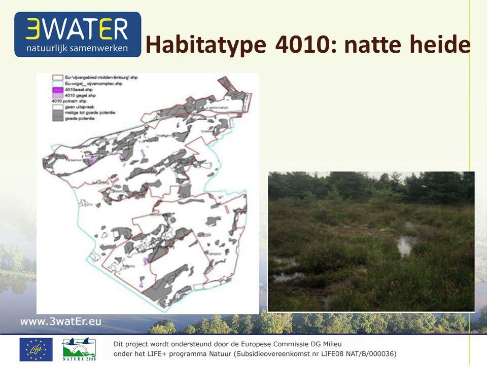 Habitatype 4010: natte heide
