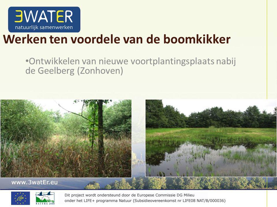 Ontwikkelen van nieuwe voortplantingsplaats nabij de Geelberg (Zonhoven) Werken ten voordele van de boomkikker