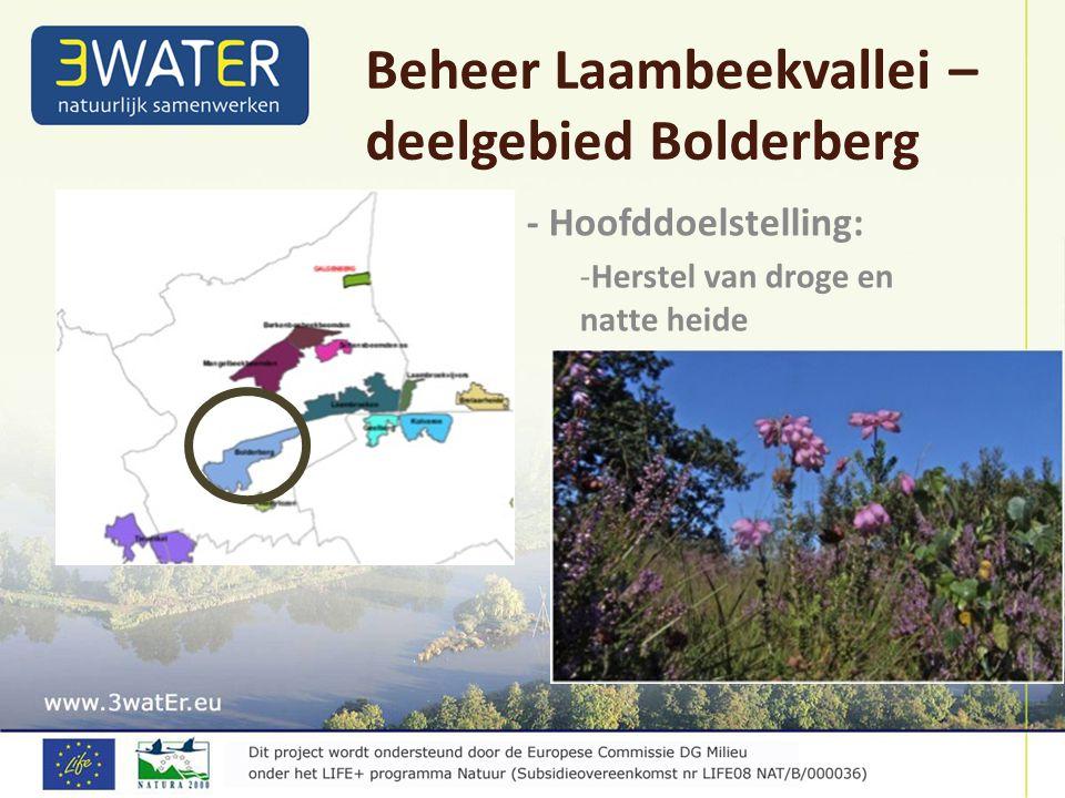 - Hoofddoelstelling: -Herstel van droge en natte heide Beheer Laambeekvallei – deelgebied Bolderberg