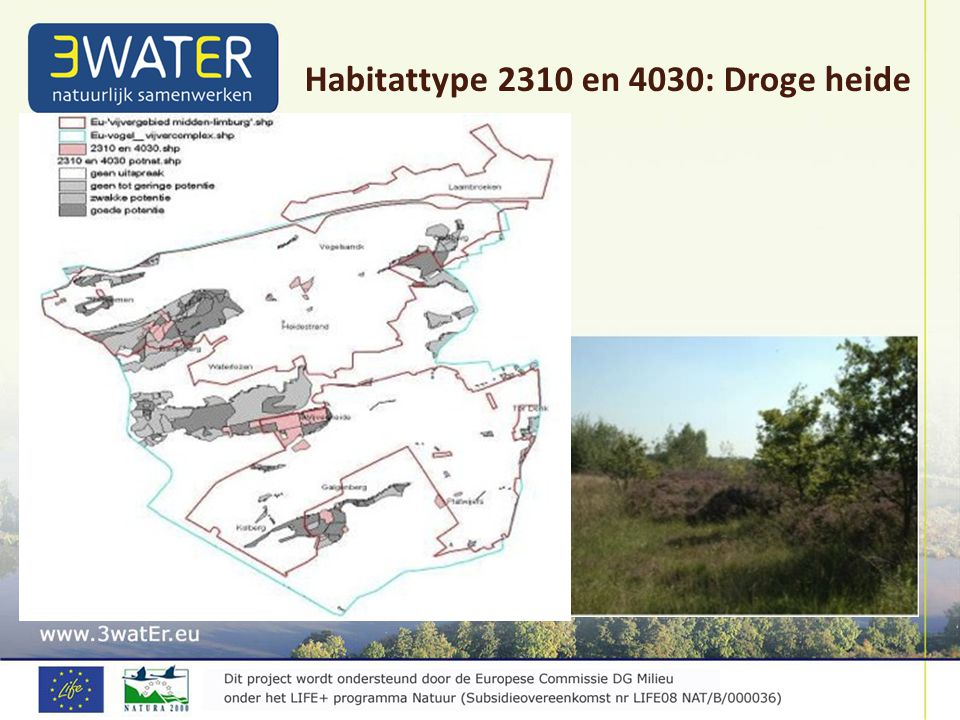 Habitattype 2310 en 4030: Droge heide