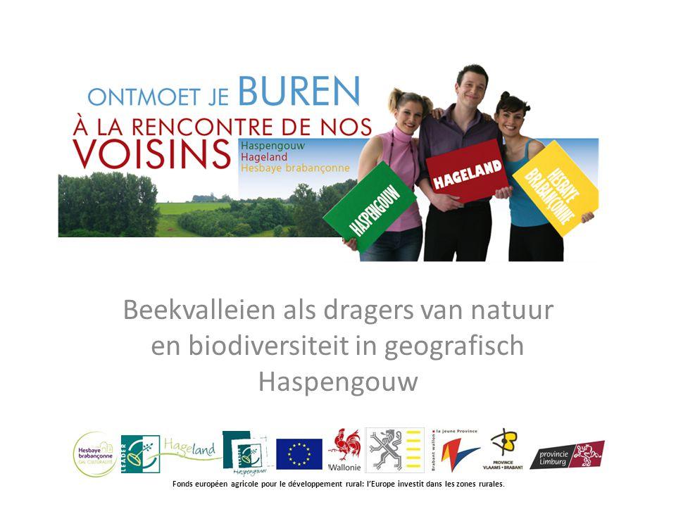 Beekvalleien als dragers van natuur en biodiversiteit in geografisch Haspengouw Fonds européen agricole pour le développement rural: l'Europe investit dans les zones rurales.