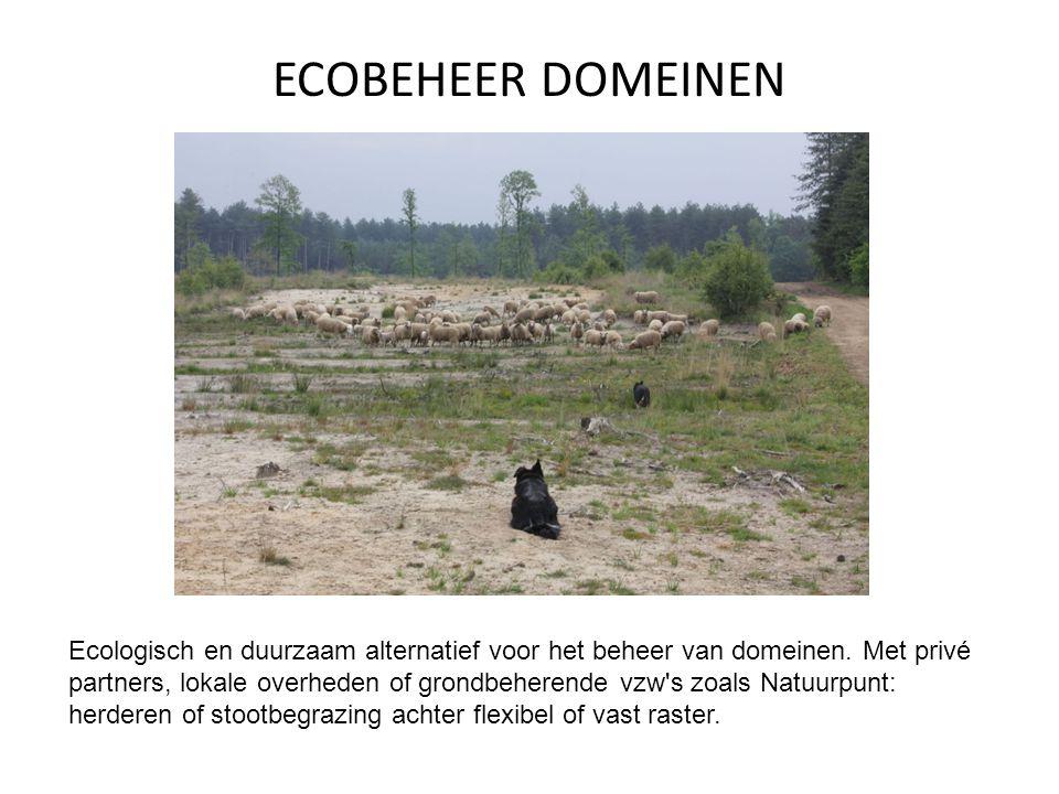 ECOBEHEER DOMEINEN Ecologisch en duurzaam alternatief voor het beheer van domeinen.