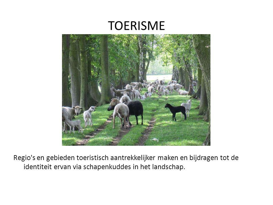 TOERISME Regio s en gebieden toeristisch aantrekkelijker maken en bijdragen tot de identiteit ervan via schapenkuddes in het landschap.