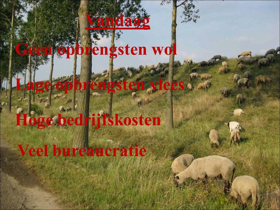 Vandaag Geen opbrengsten wol Lage opbrengsten vlees Hoge bedrijfskosten Veel bureaucratie