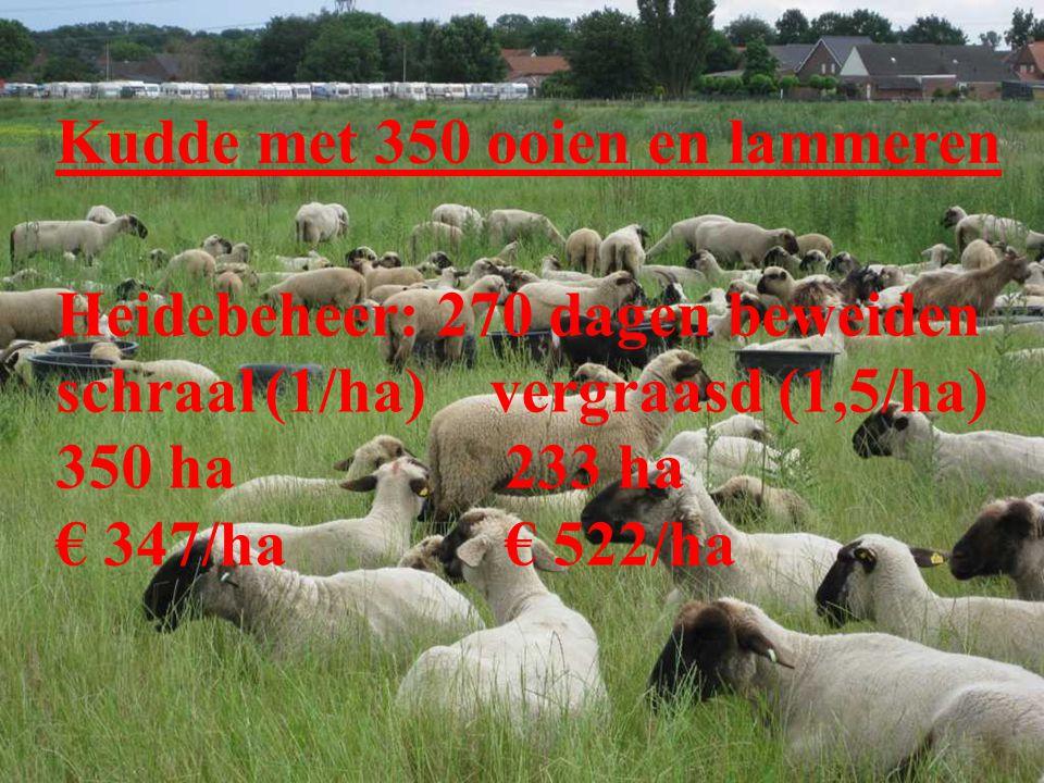 Kudde met 350 ooien en lammeren Heidebeheer: 270 dagen beweiden schraal(1/ha) vergraasd (1,5/ha) 350 ha 233 ha € 347/ha € 522/ha