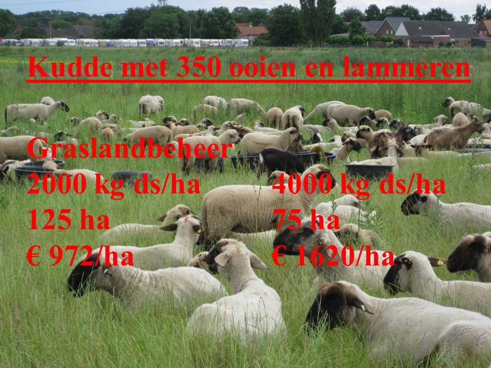 Pluspakket 18: Droog soortenrijk grasland / Bloemdijk D.