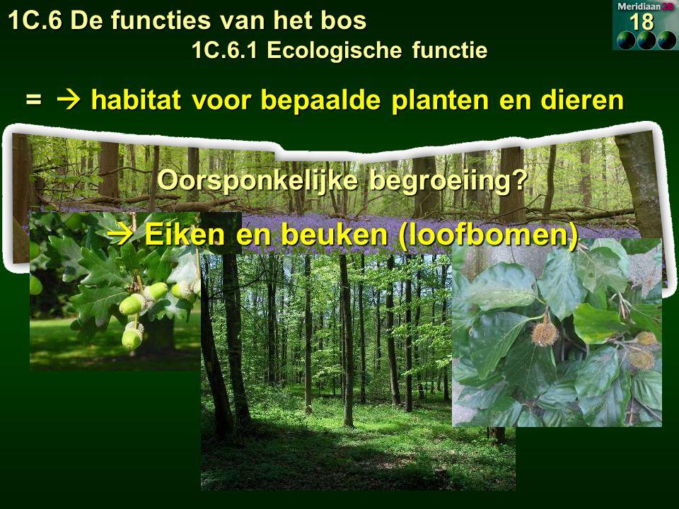  habitat voor bepaalde planten en dieren Oorsponkelijke begroeiing.